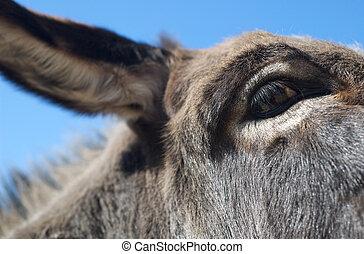 Close up of a donkey's eye
