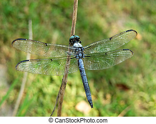 Close-up of a Dragon Fly on a branch