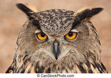 Close up of a Eurasian Eagle Owl