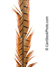 Close-up of a feather