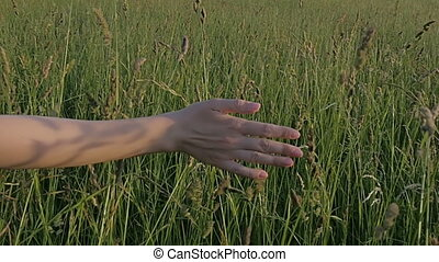 Close-up of a female hand passing through a field in slow motion.