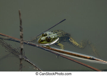 Close-up of a frog sitting in the water