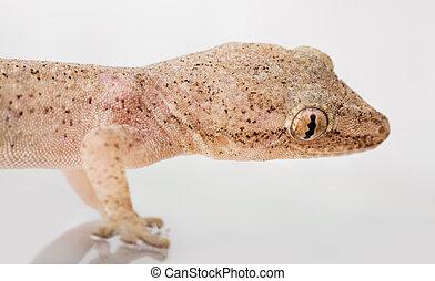 Close up of a gecko's head