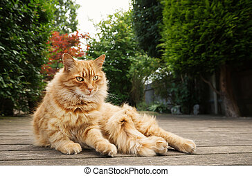 Close up of a ginger cat lying in the garden