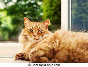 Close-up of a ginger cat lying on the floor by the patio door