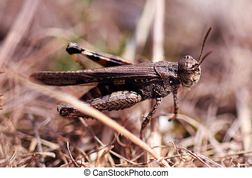 Close up of a grasshopper