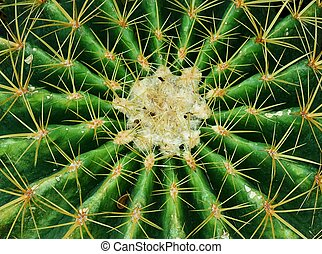 Close Up of A Green Cactus Plant