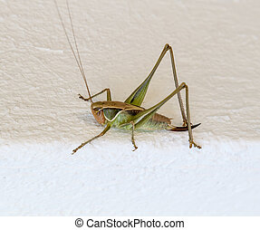 Close up of a green Hopper on white wall.