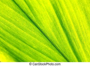 Green leaf - Close up of a Green leaf