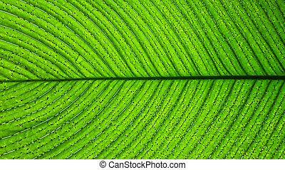 Close up of a green leaf with dark lines or veins