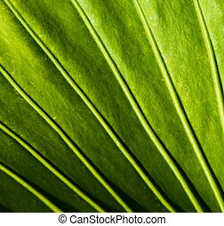 Close-up of a green plant leaf