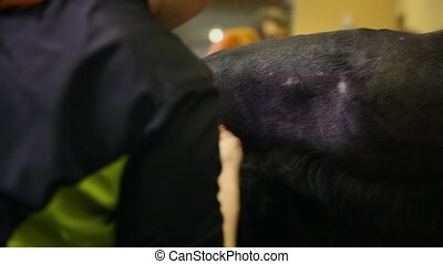 Close-up of a groomer's hand cutting a dog in a beauty salon for dogs using an electric clipper. Torso of a dog