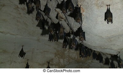 Close up of a group of bats hanging in a cave