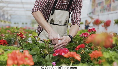 Close up of a hand holding a funnel. A man with a beard in a garden apron pours ornamental plants with water. Garden with decorative trees on a sunny day.