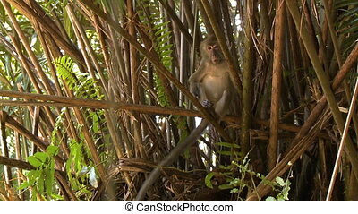 Close-Up Of A Hiding Monkey, Rainforest Island - Close-up...