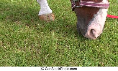 Close-up of a horse's head.