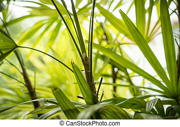 close up of a indoor palm tree
