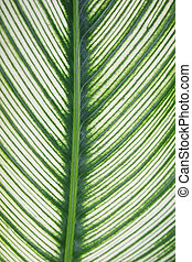 Close-up of a leaf