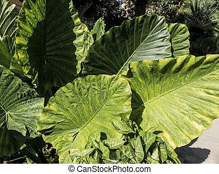 close-up of a leaf in fresh, juicy greenery.