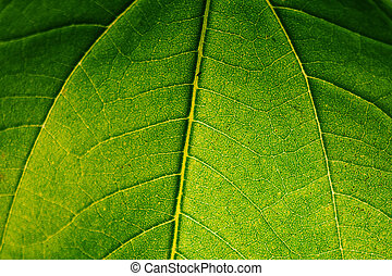 Close-up of a leave