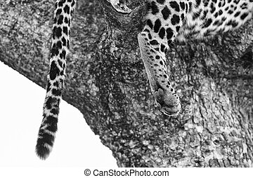 Close-up of a leopard paw artistic conversion
