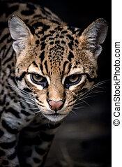 Close up of a leopard
