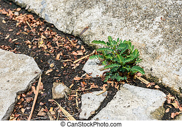 little green plant growing