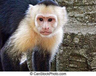 Close-up of a monkey. wildlife