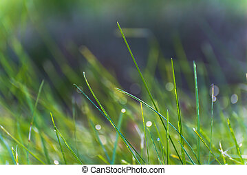 Close up of a morning dew on green grass