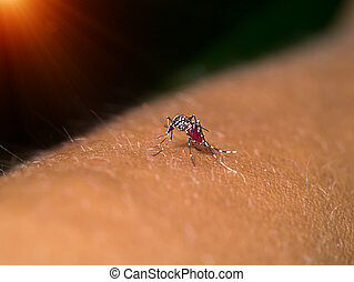 Close-up of a mosquito sucking blood.