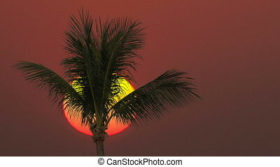 Close-up of a palm tree on a sunrise background. Time lapse.