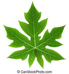 Papaya Leaf Isolated