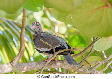 Close up of a pigeon Bird on a branch