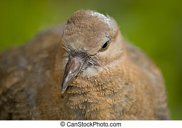 Close-up of a pigeon