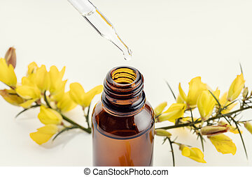 Close up of a pipette, amber bottle and yellow flower branch at background. Gorse essential oil.
