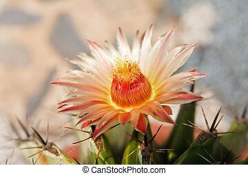 Close-up of a prickly cactus
