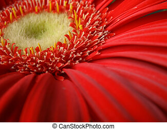 close-up of a red flower