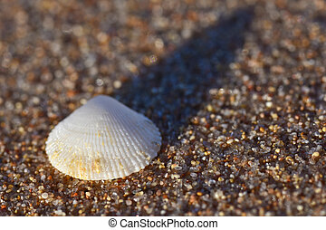 Close up of a seashell on the sand of the sea sunny evening, copy Space