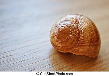 Close-up of a seashell