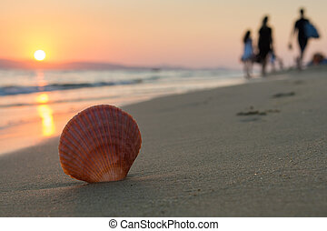close up of a seashell while people are leaving the beach at sunset. Selective focus