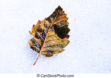 single leaf on snow