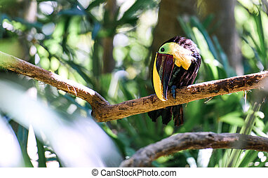 Close up of a toucan on a tree branch