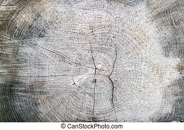 Close up of a tree stump in the forest