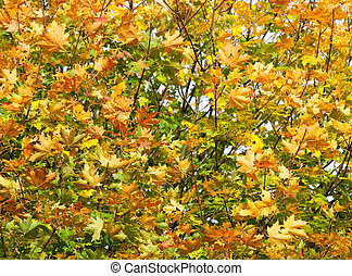 Close up of a tree with leaves changing in early autumn