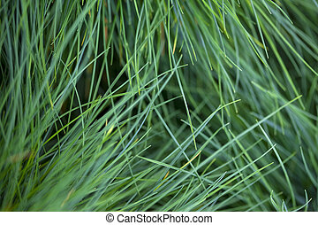 Close up of a vegetation background