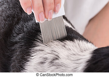 Vet Examining Dog's Hair With Comb - Close-up Of A Vet...