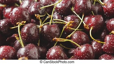 Close-up of a wet red ripe juicy cherries. Drops of water on...