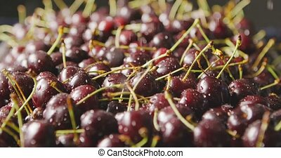 Close-up of a wet red ripe juicy cherries with drops of...