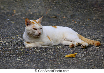 Close-up of a white cat lying on the street