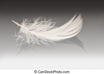 white feather on grey